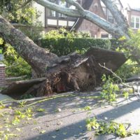 Assessing Roof Damage Caused By Trees